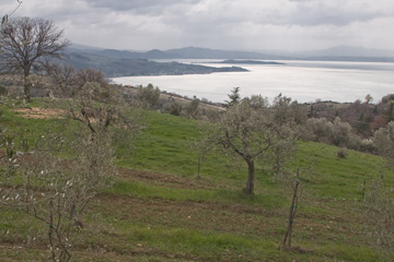 Olive trees and Lake Trasimeno
